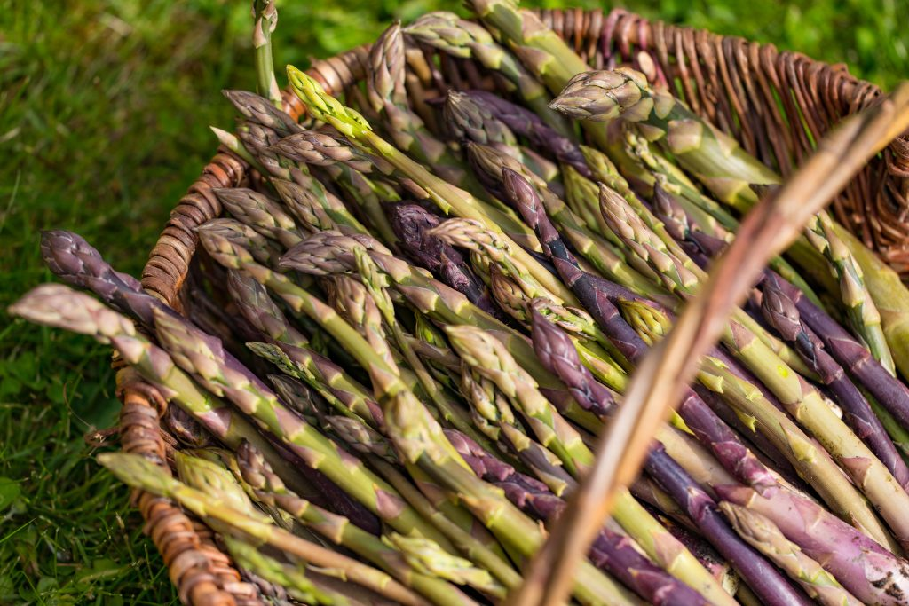 Gordon Castle Walled Garden Asparagus