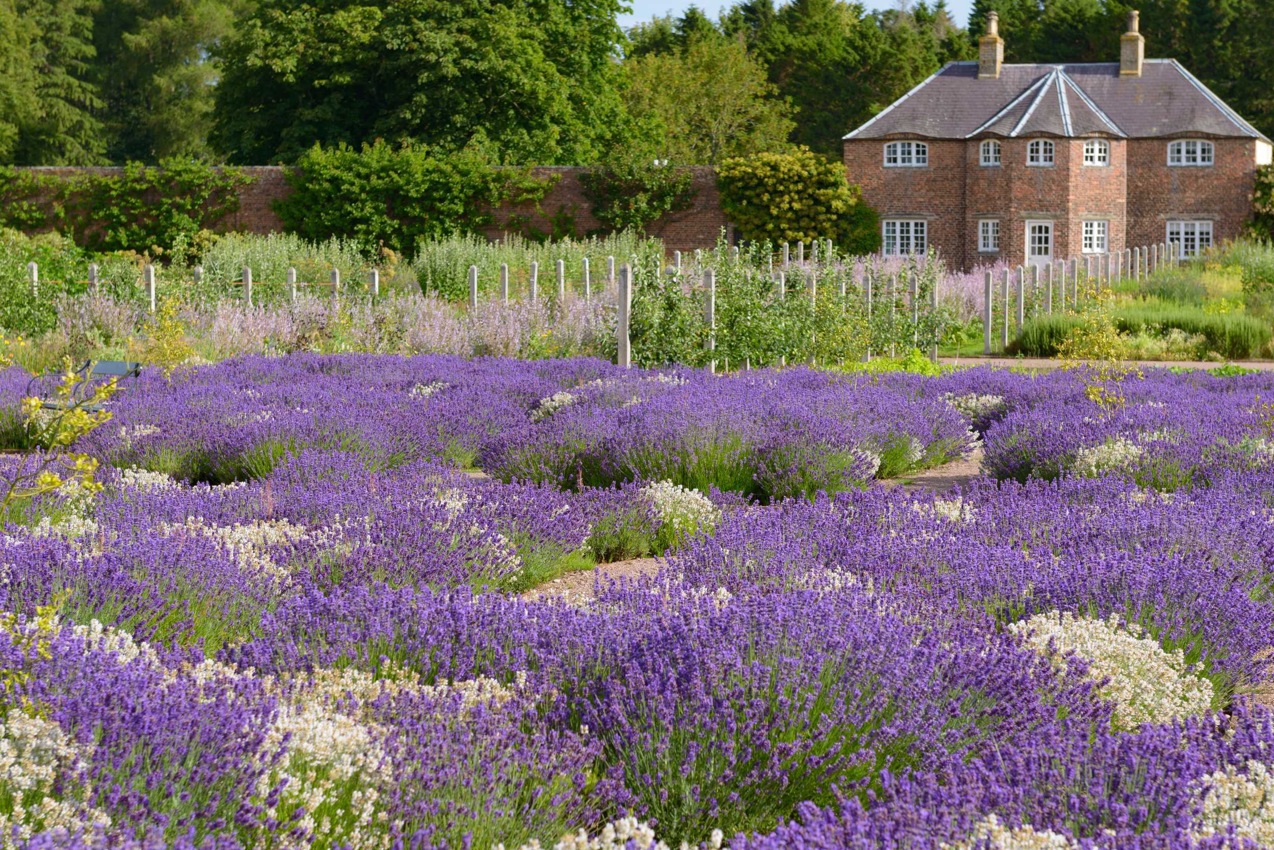 The Garden Has Been Its Most Beautiful To Date Attracting Visits From English Magazine Gardens Illustrated And Scottish Field