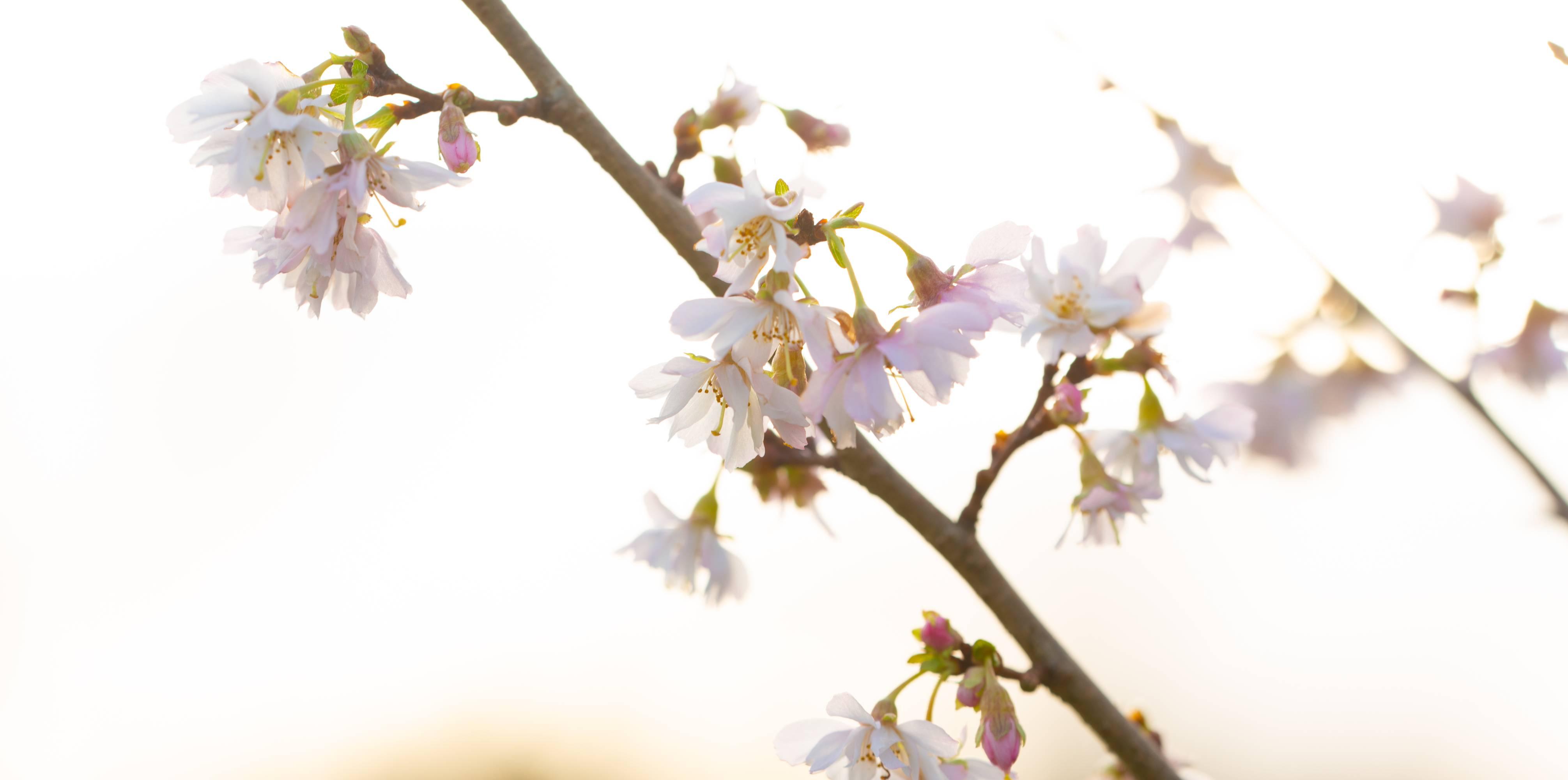 Gordon Castle Walled Garden Blog Jan 2019